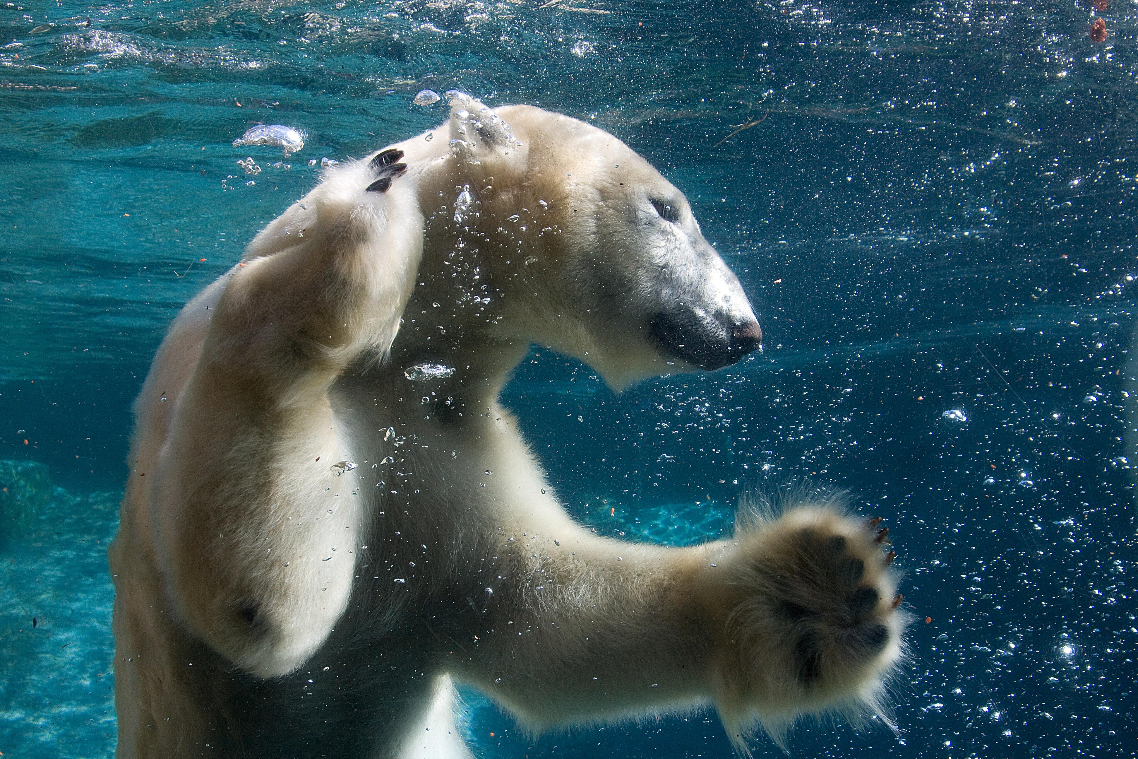 Preparing For Your Polar Bear Dip