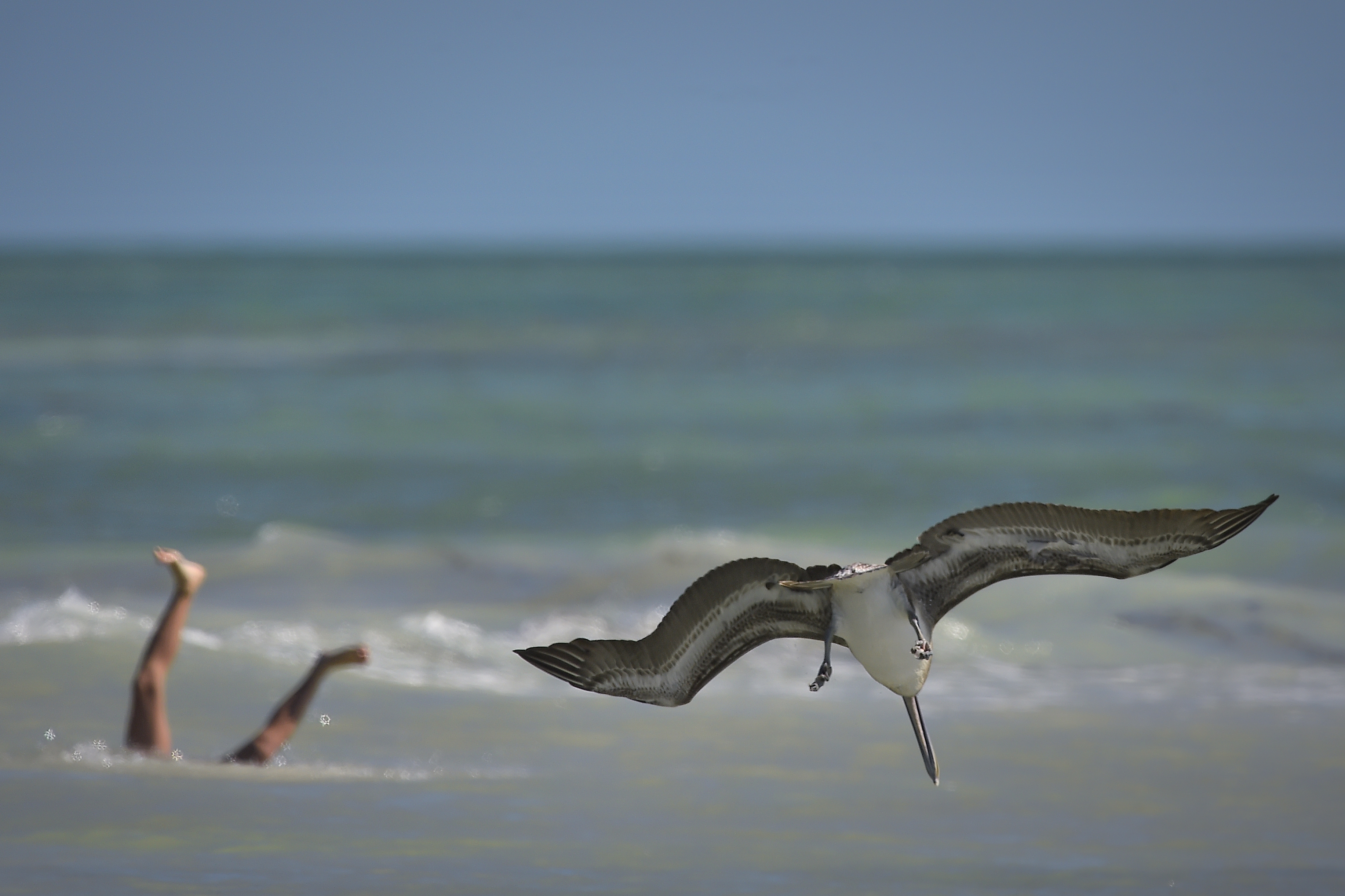 Sharing the beach with wildlife,