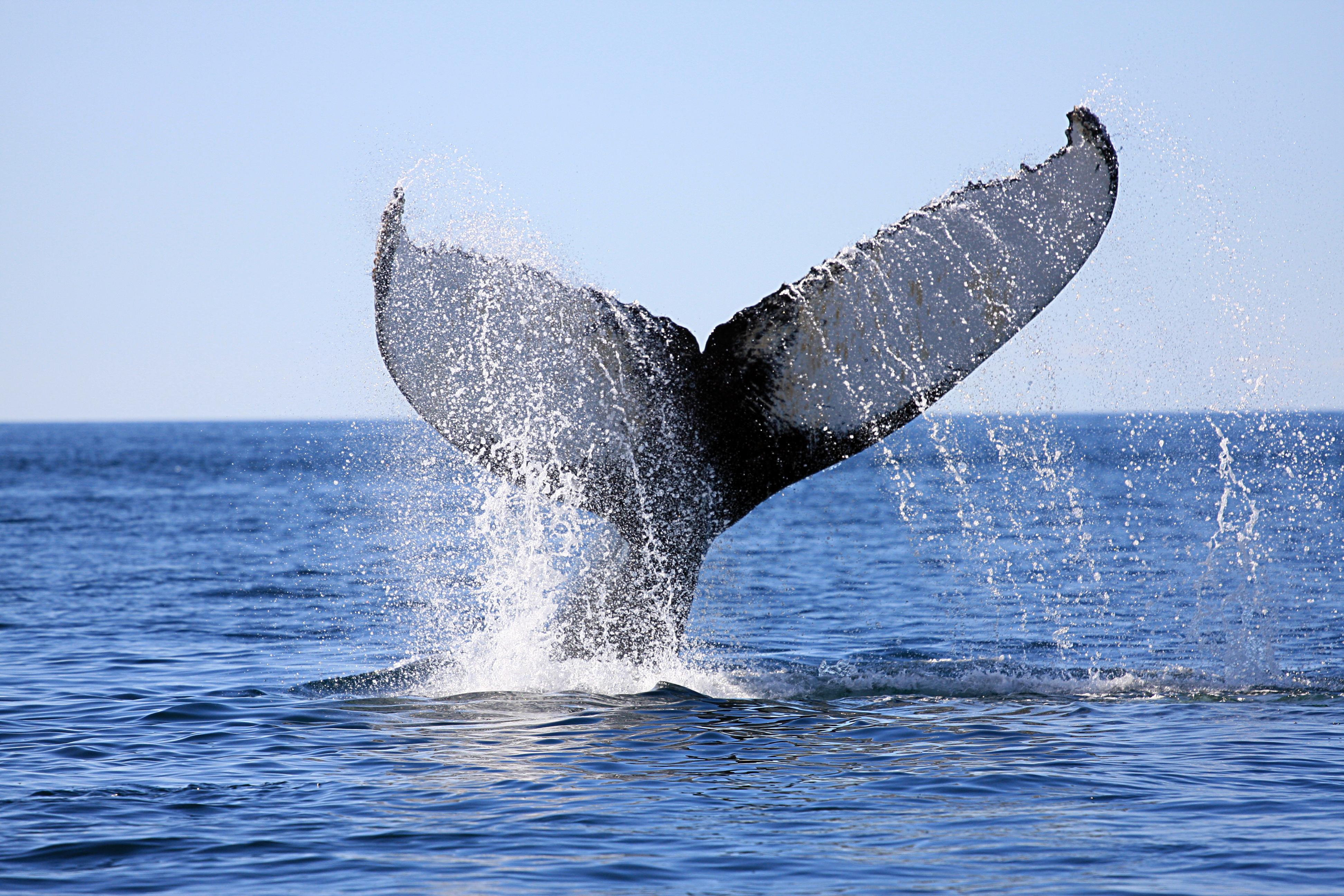 whales, breathing underwater