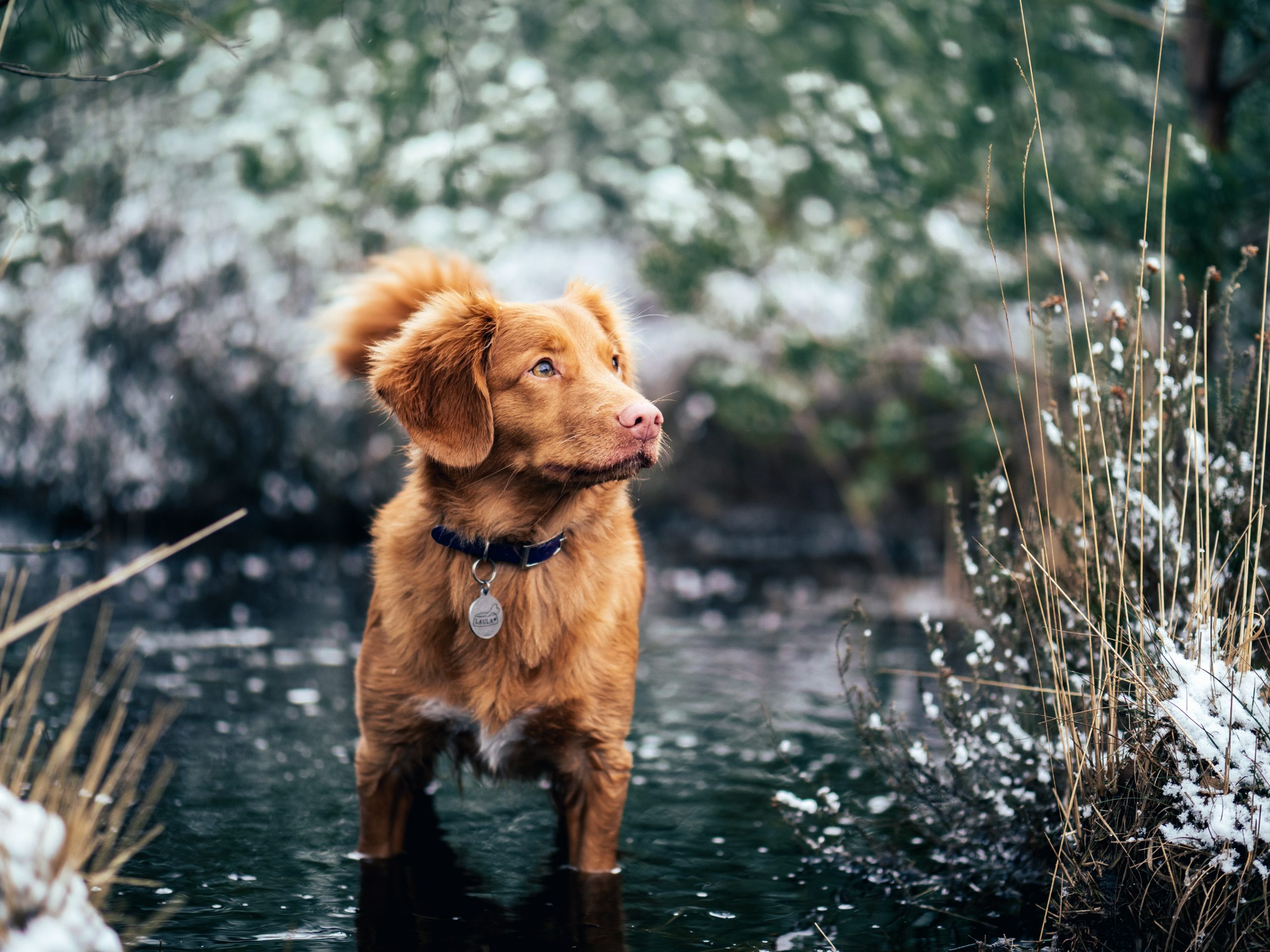 How to Safely Take Your Dog Cold Water Swimming