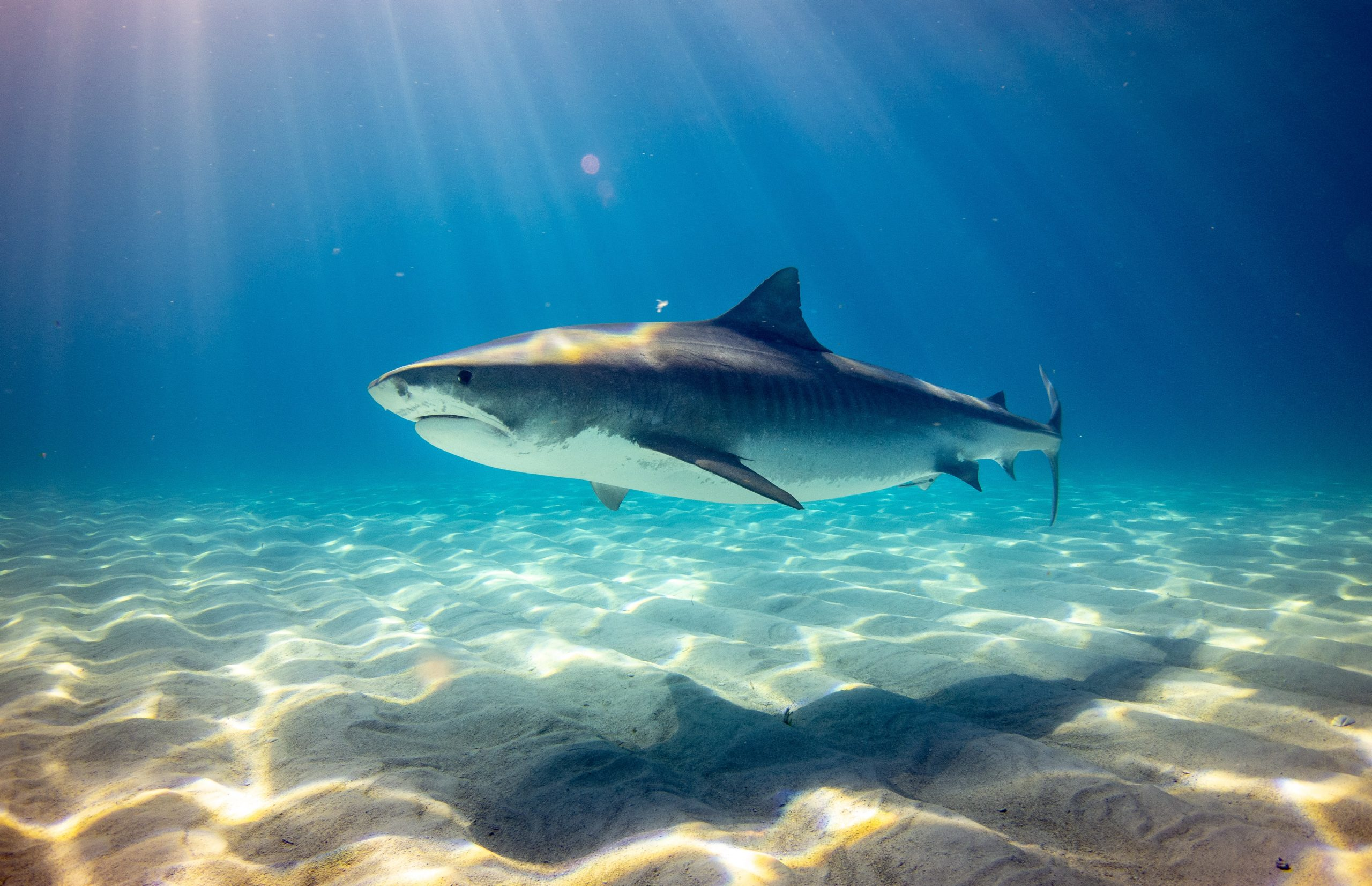 Sharks-at-the-Beach